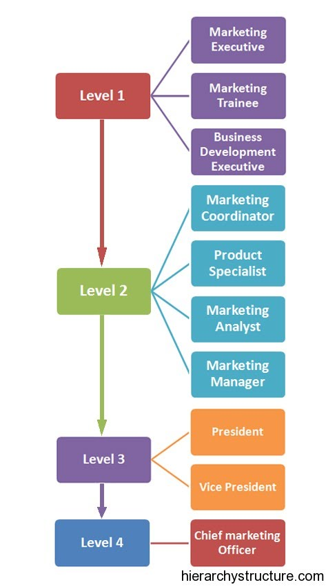 digital-marketing-job-hierarchy
